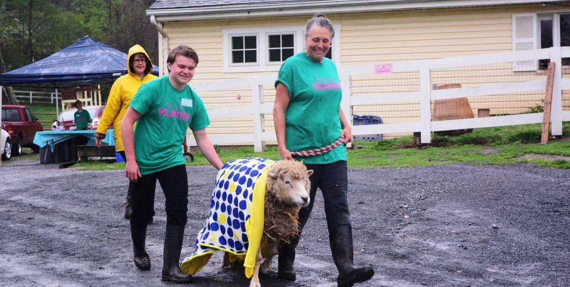 Shearing in the Rain